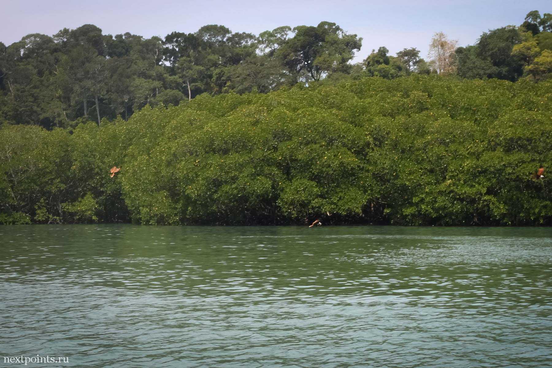 Singa Besar - остров орлов