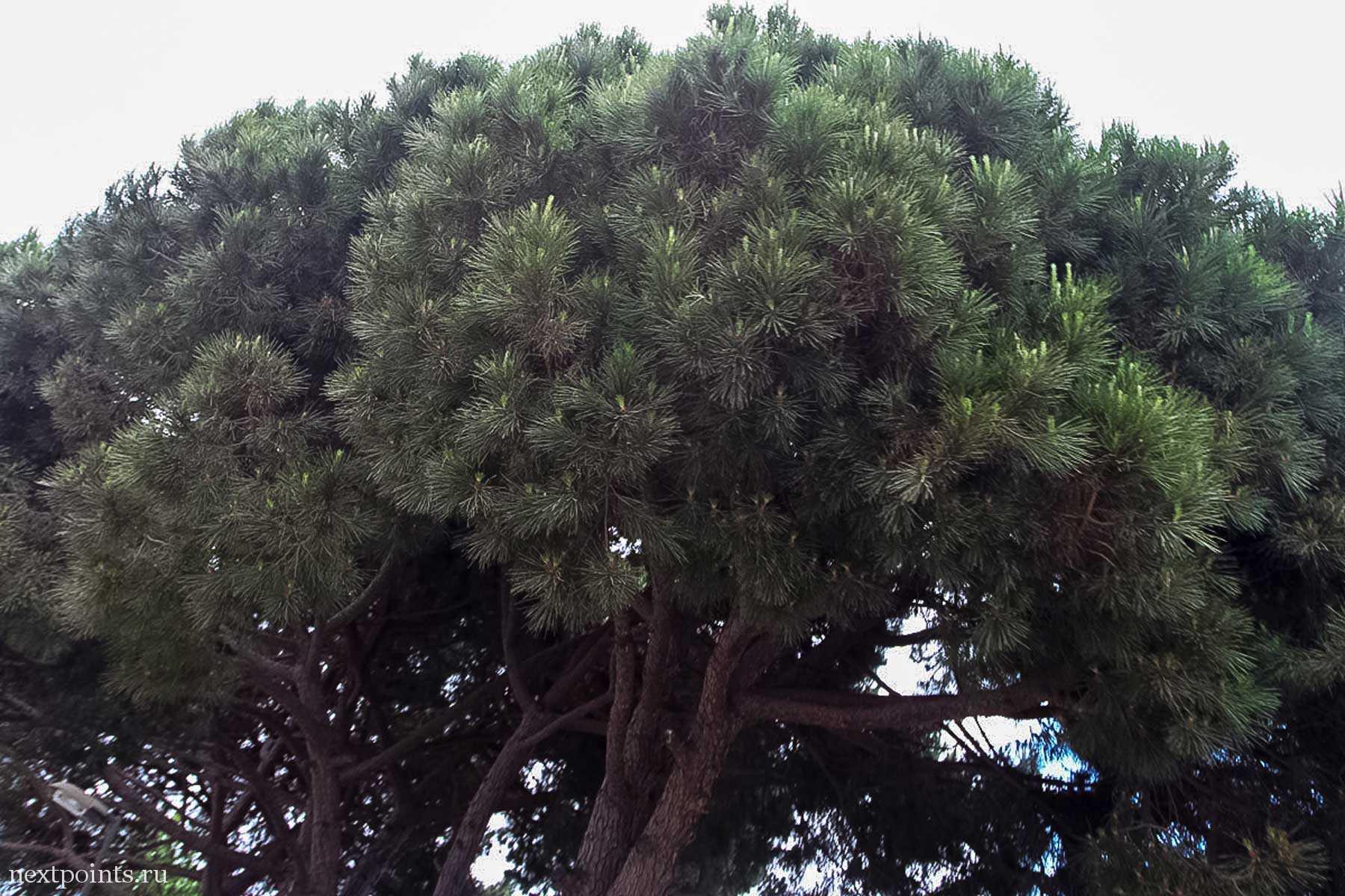 Пышные кроны деревьев в Кастельдефельсе