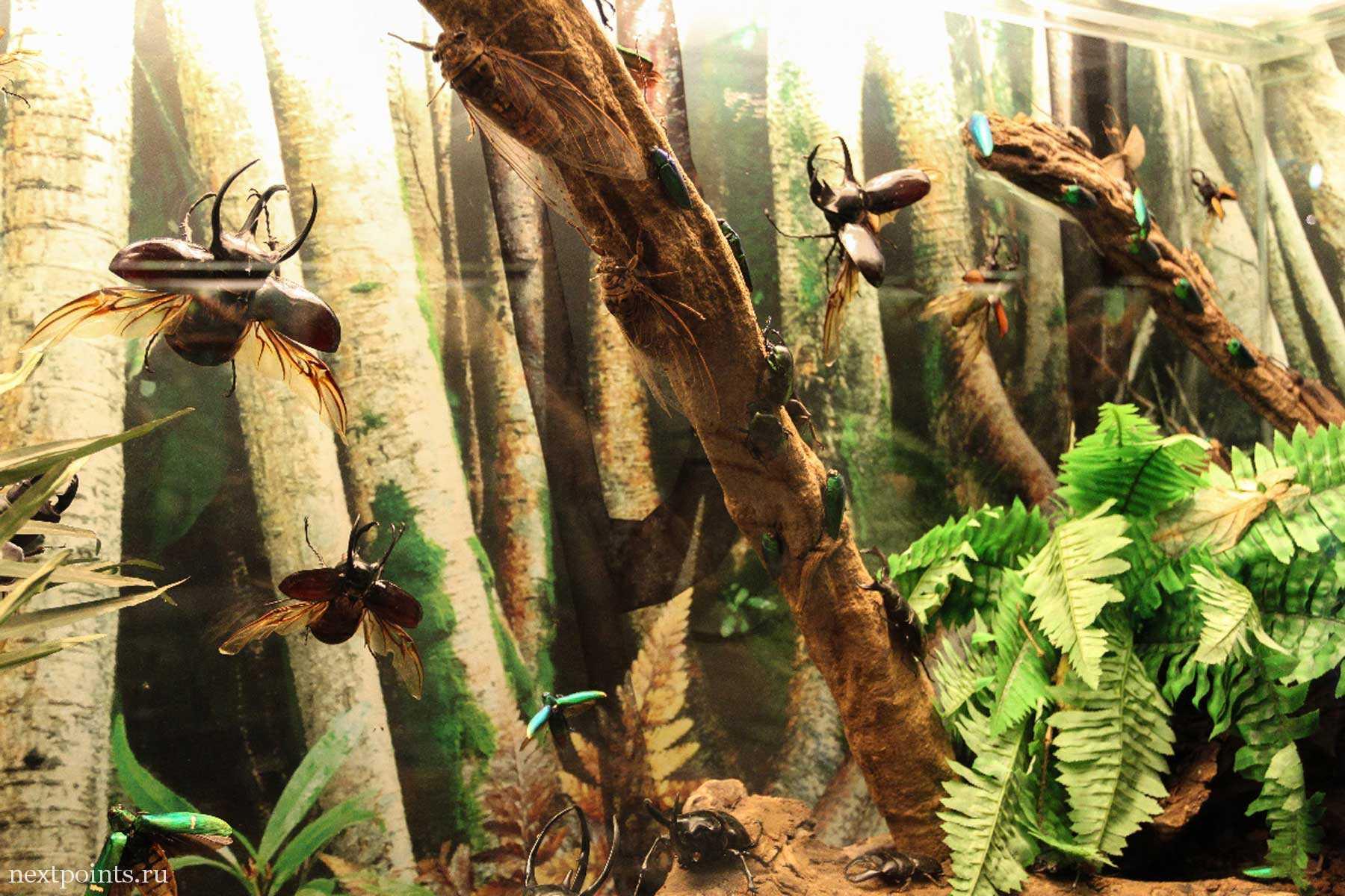 Муляжи жуков в океанариуме торгового центра Suria KLCC