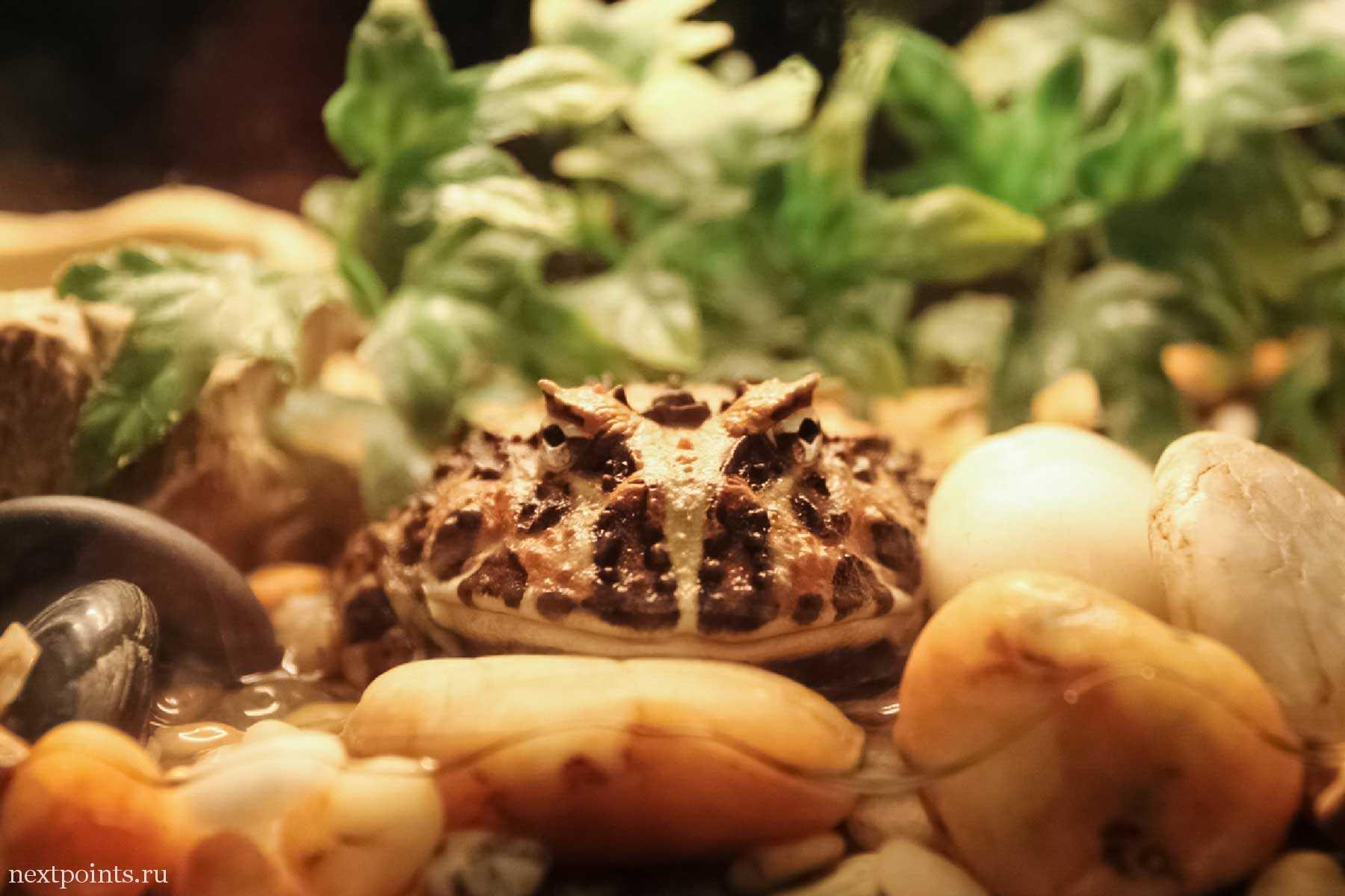 Рогатая лягушка в океанариуме Малайзии