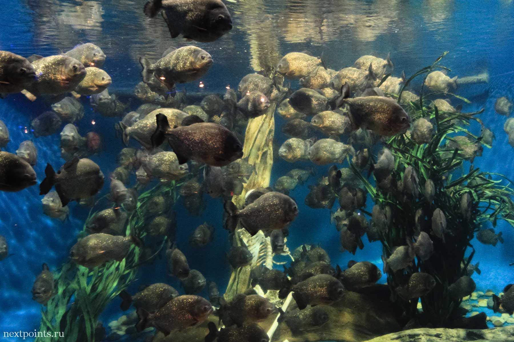 Рыбье царство океанариума Куала-Лумпура