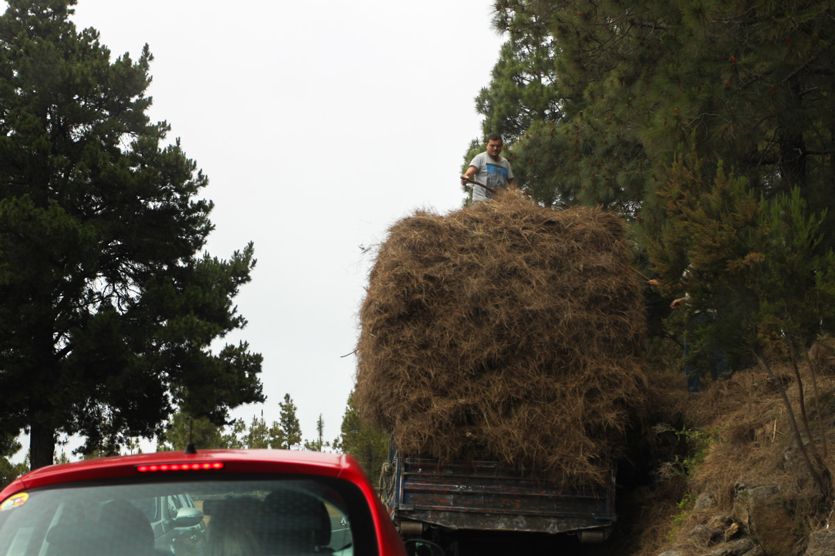 Машина с сеном по дороге с Тейде