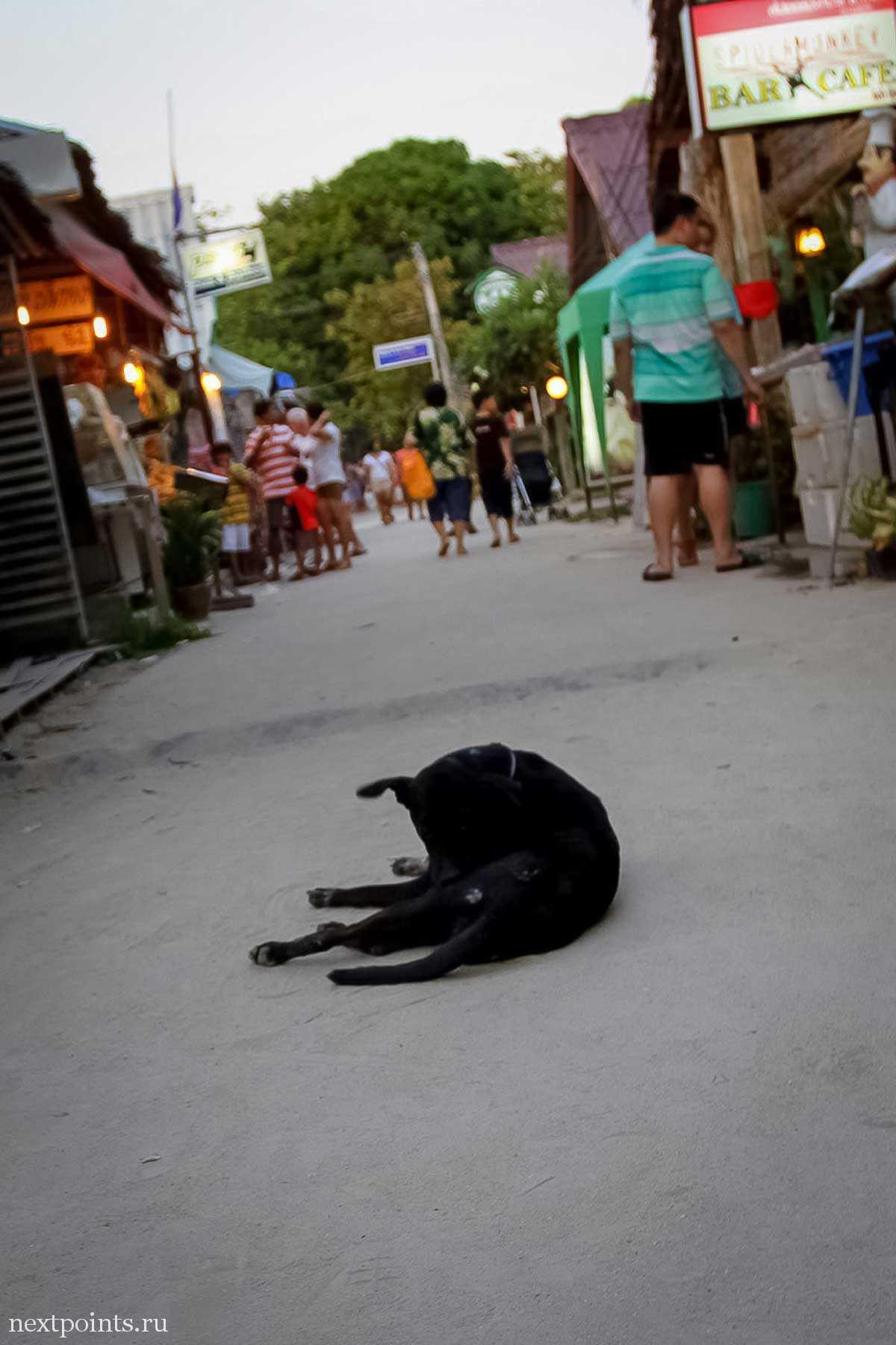 Собачка на главной улице Ко Липе