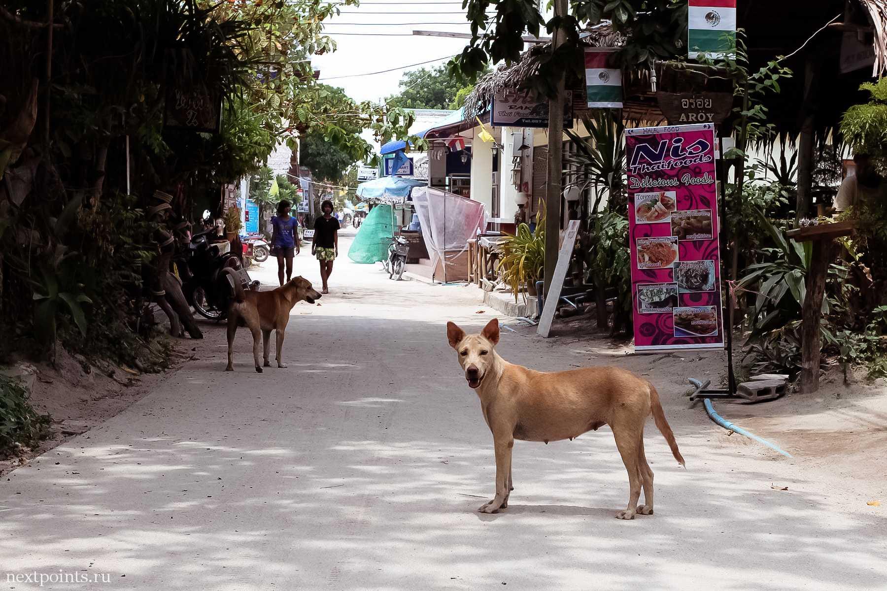 На острове Ко Липе (Koh Lipe) в Таиланде очень много симпатичных собак