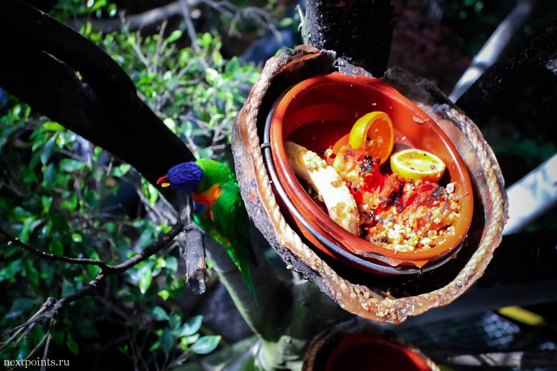 Вкусности для птиц