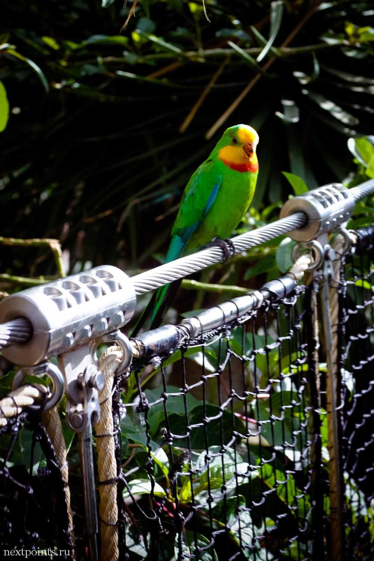 Птицы в доступности в Лоро Парке