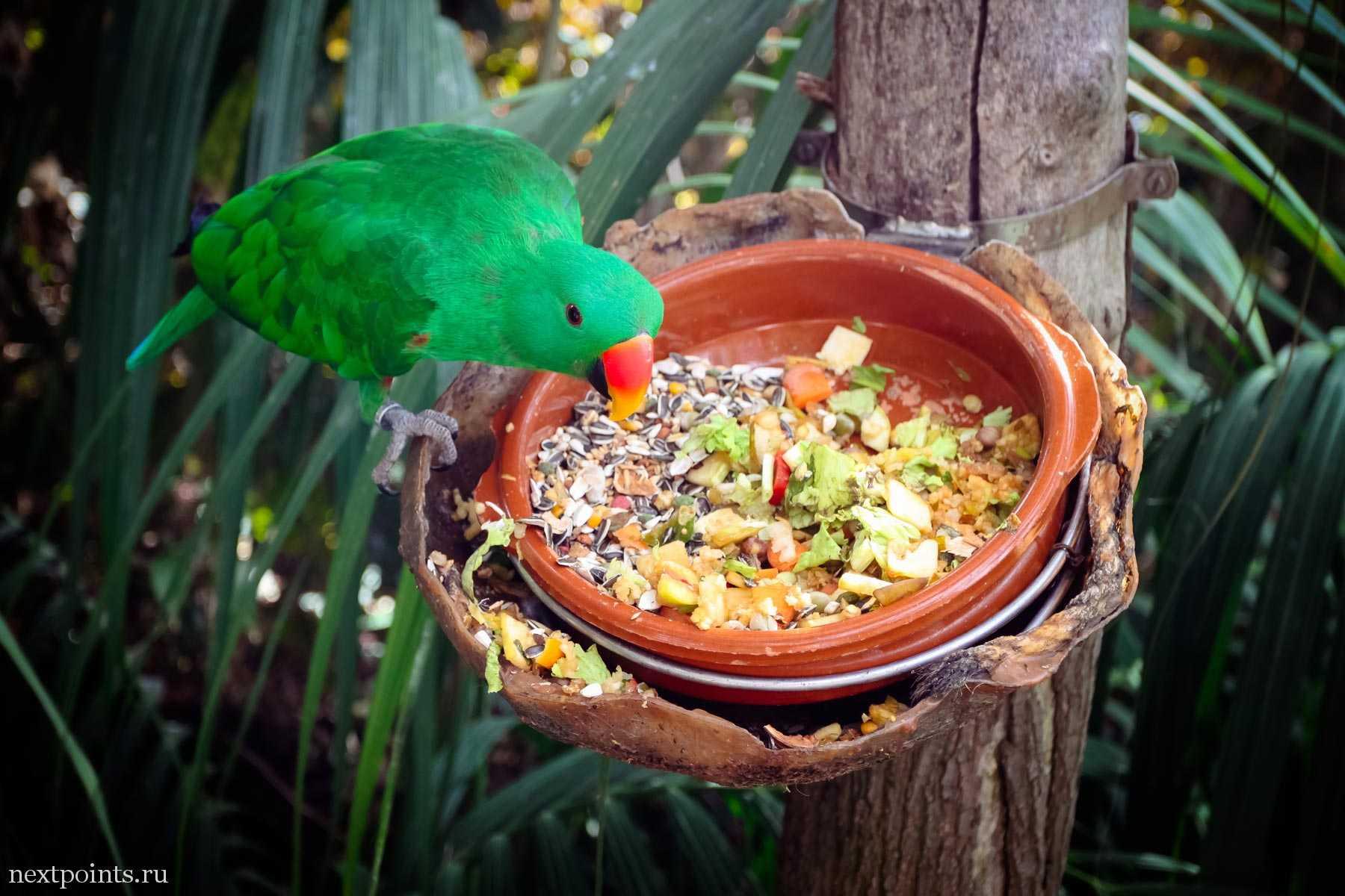Попугай ест фрукты и семечки в Лоро Парке