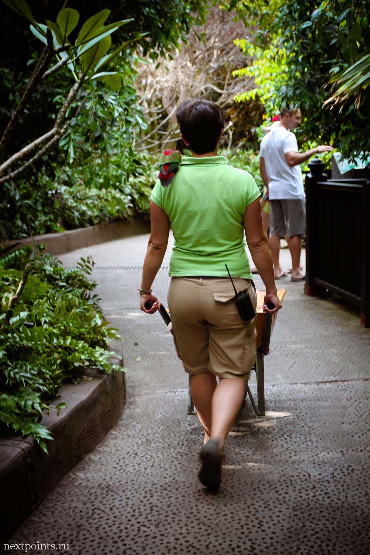 Сотрудница Лоро Парка с попугаем на плече