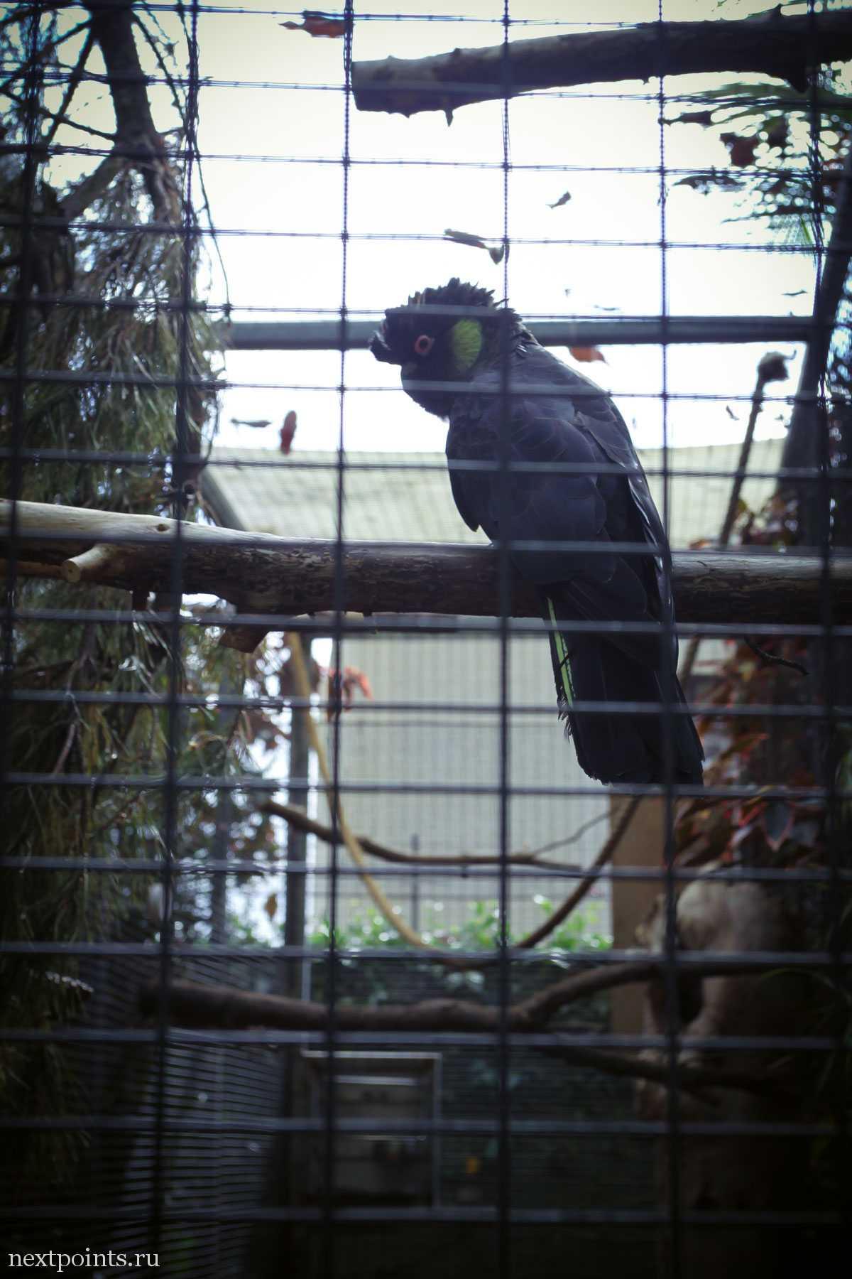 Попугай в голубом фильтре