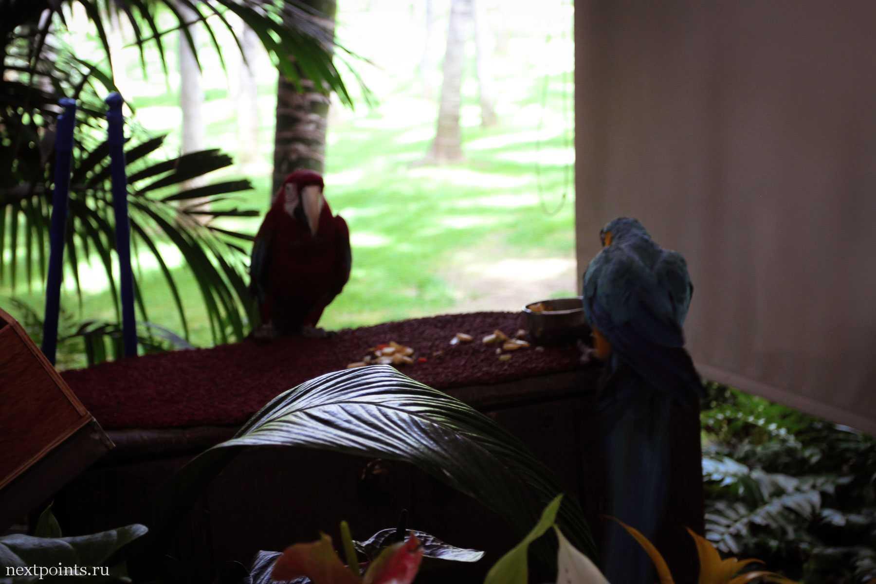 Попугаи, с которыми можно сфотографироваться, взяв на руку