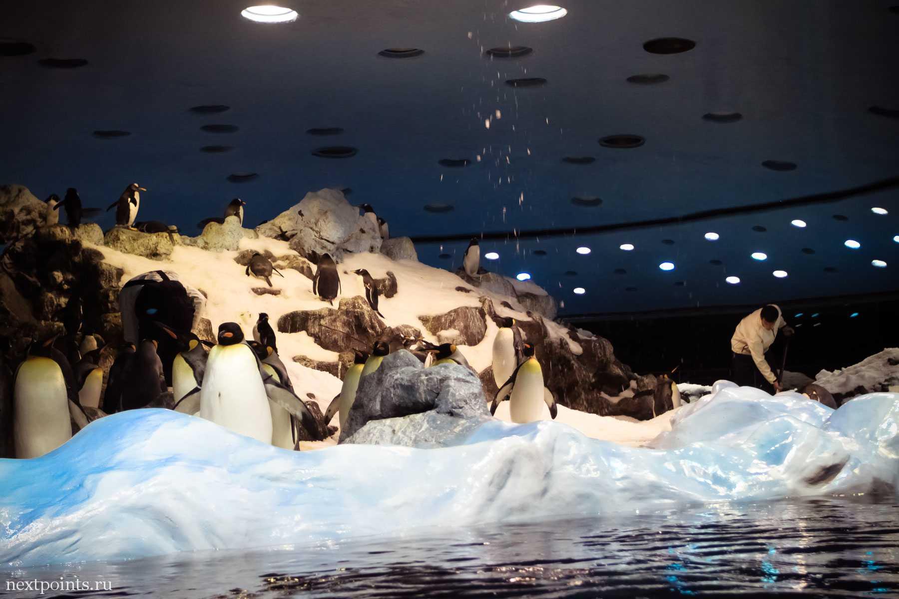 Пушка со снегом для пингвинов