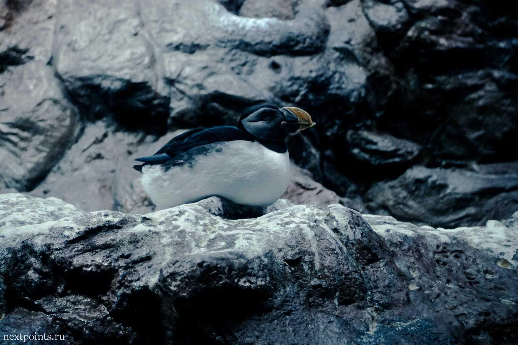 Морозоустойчивая птица
