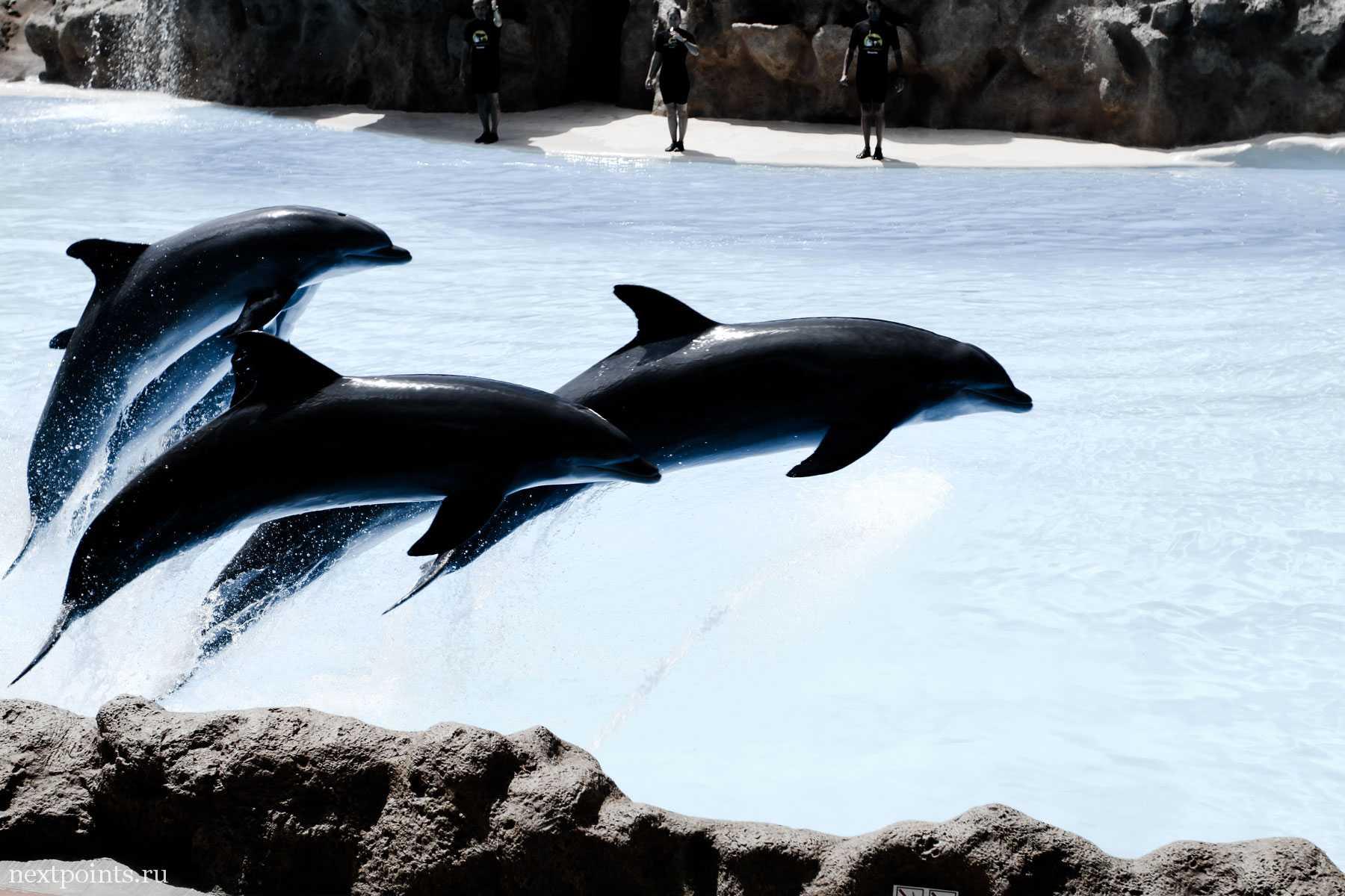 Великолепные животные в дельфинарии Лоро Парка
