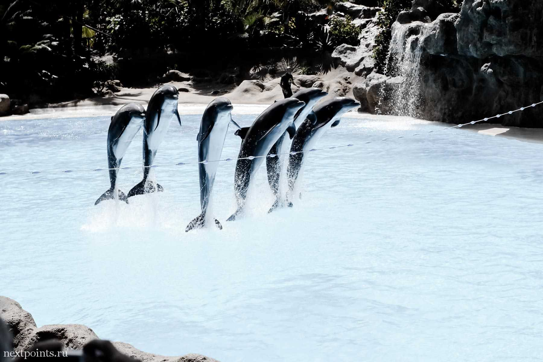 Несколько дельфинов синхронно перепрыгивают препятствие