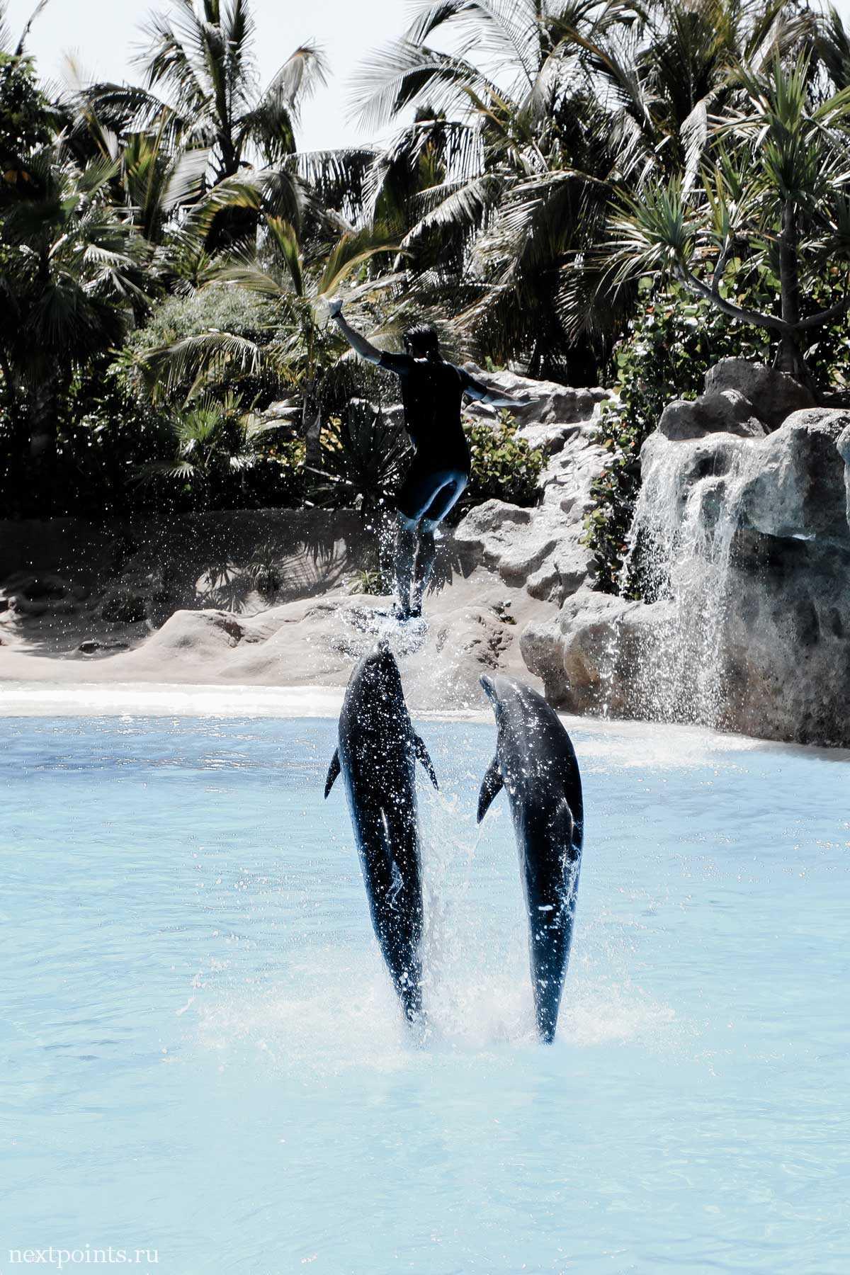 Парочка дельфинов