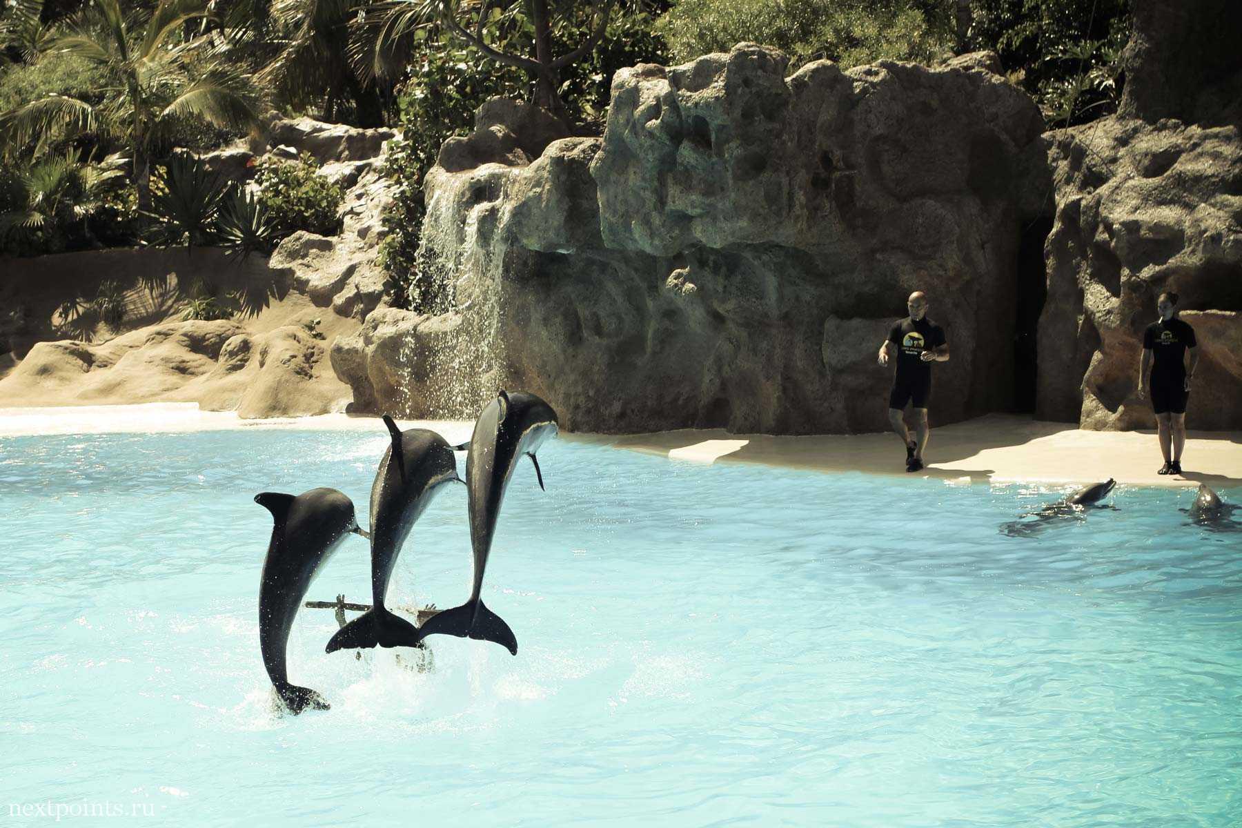Прыжок дельфинов в Лоро Парке