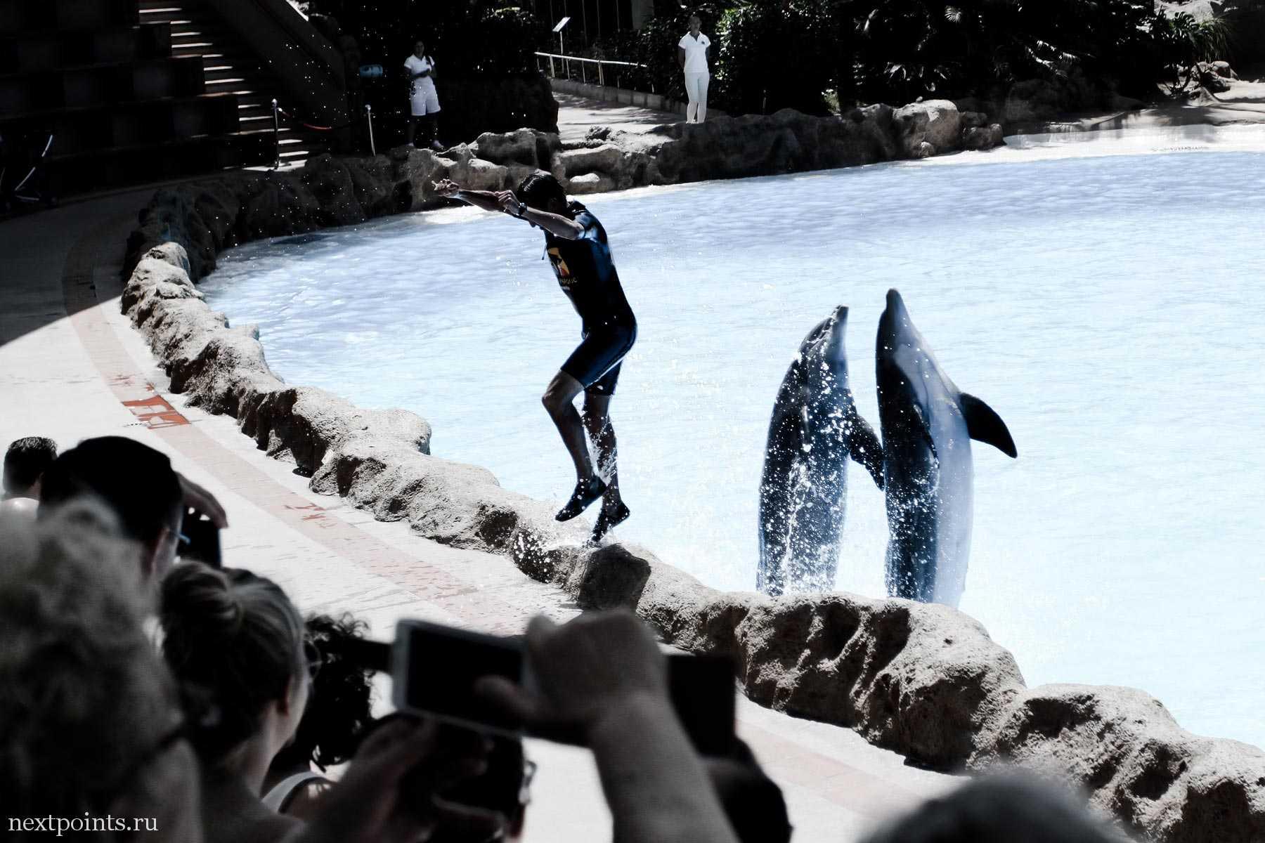Трюкачи - дельфины и человек