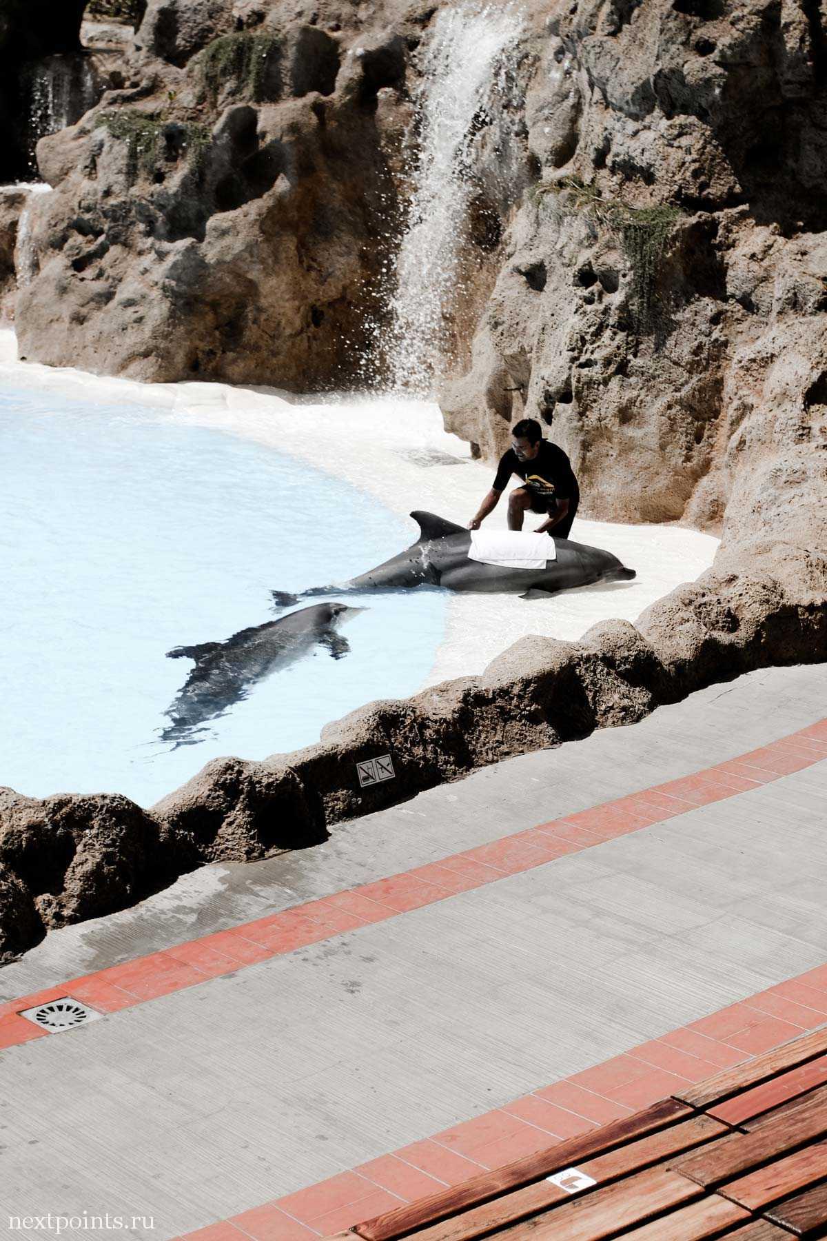 Друг дельфинов