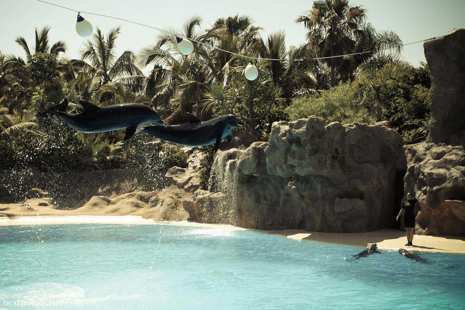 Очень высокий прыжок дельфинов в Лоро Парке