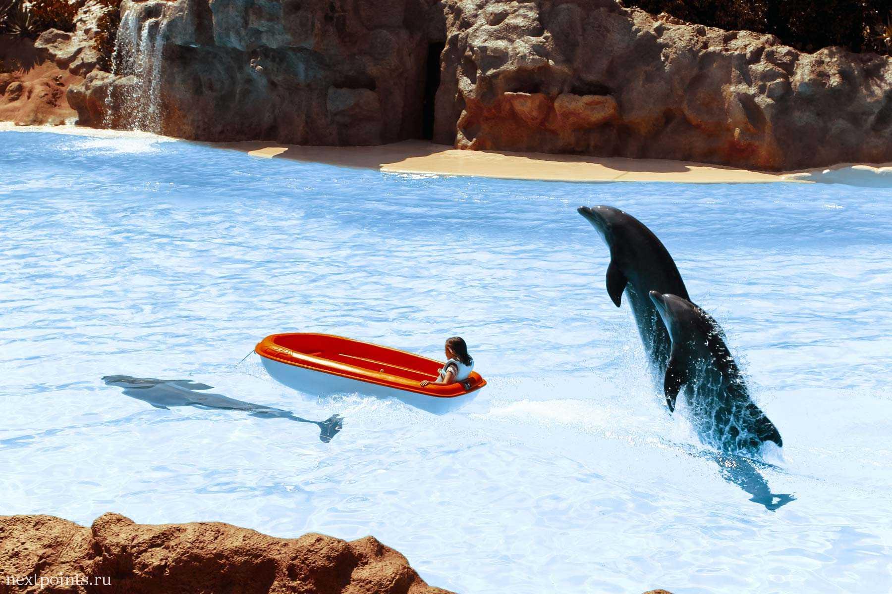 Дельфины должны проплыть с ребенком на лодке до противоположного берега