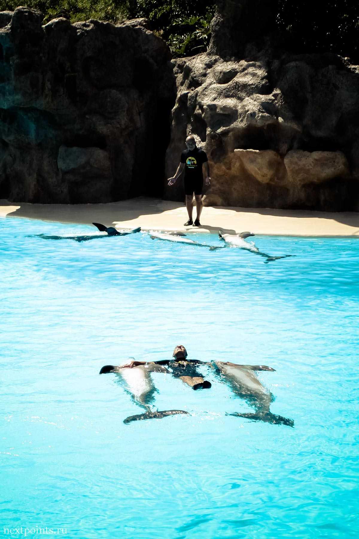Один из трюков в дельфинарии