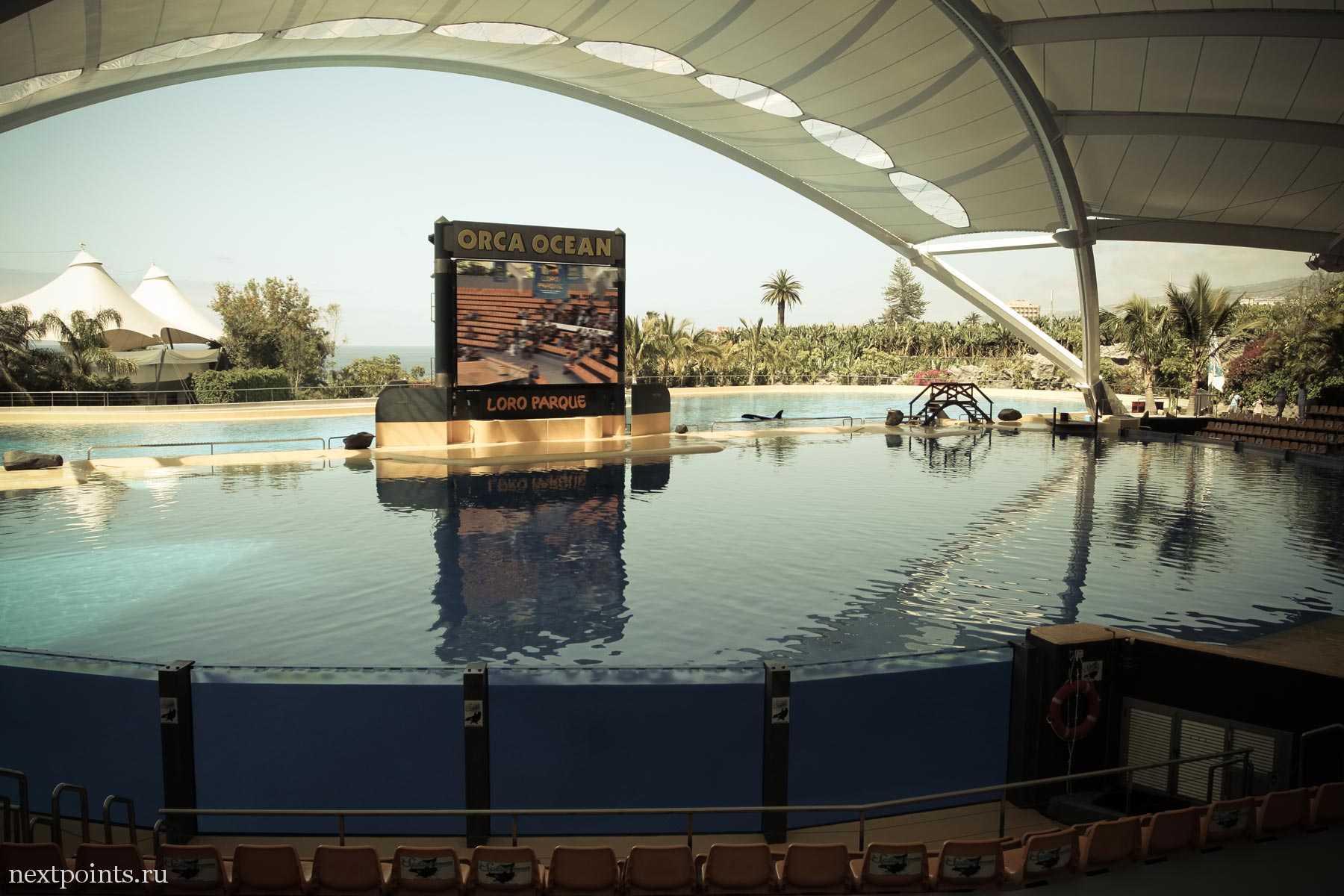 Большой бассейн для касаток