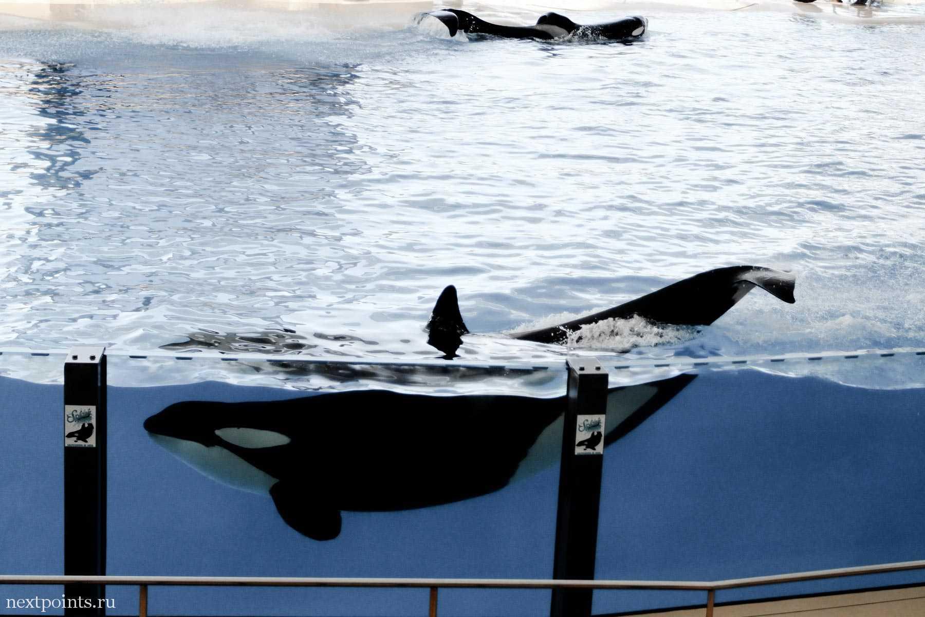 Огромные животные в Лоро Парке (Loro Park)