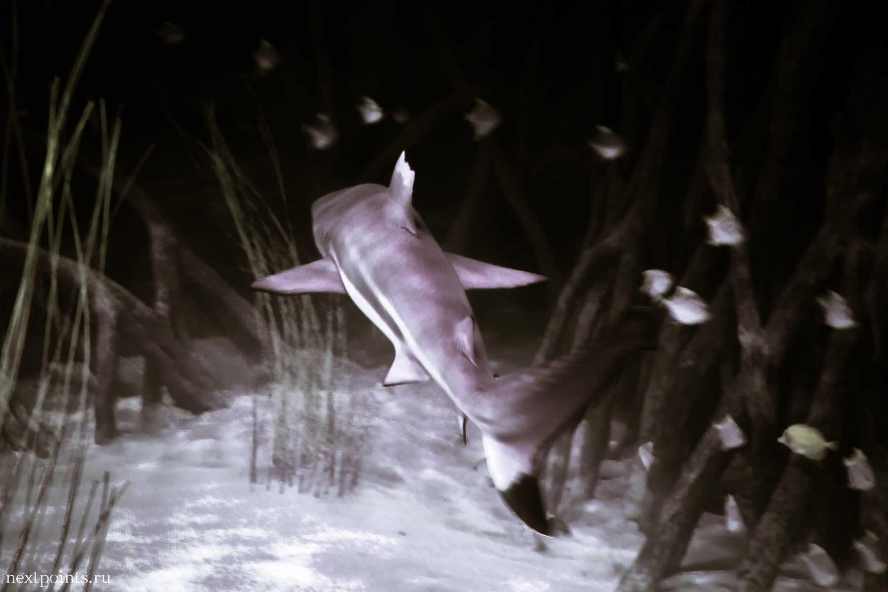 Акула в океанариуме Тенерифе