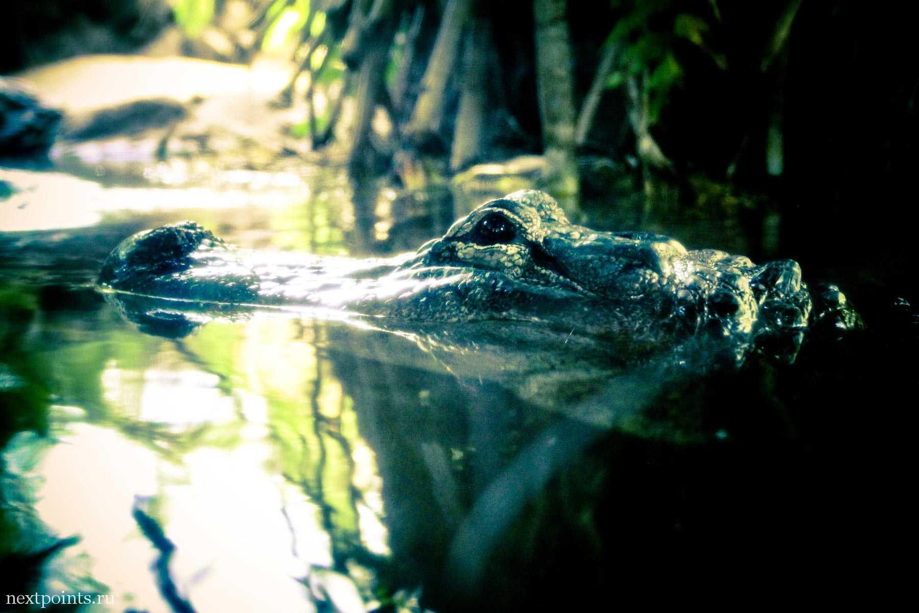 Крокодил в Лоро Парке