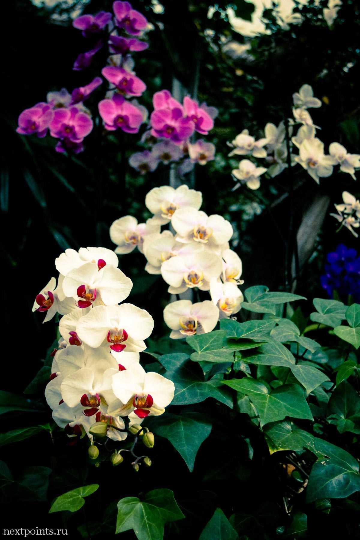 Орхидеи в парке