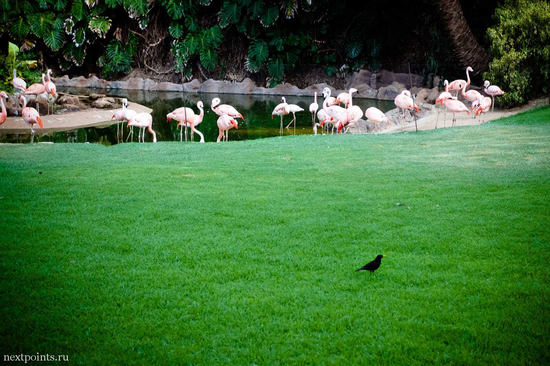 Фламинго на острове Тенерифе
