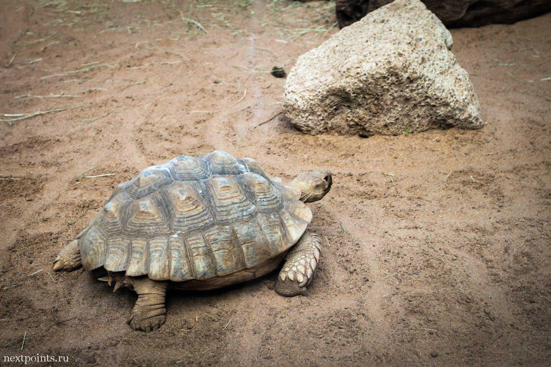 Большая черепаха в зоопарке Тенерифе