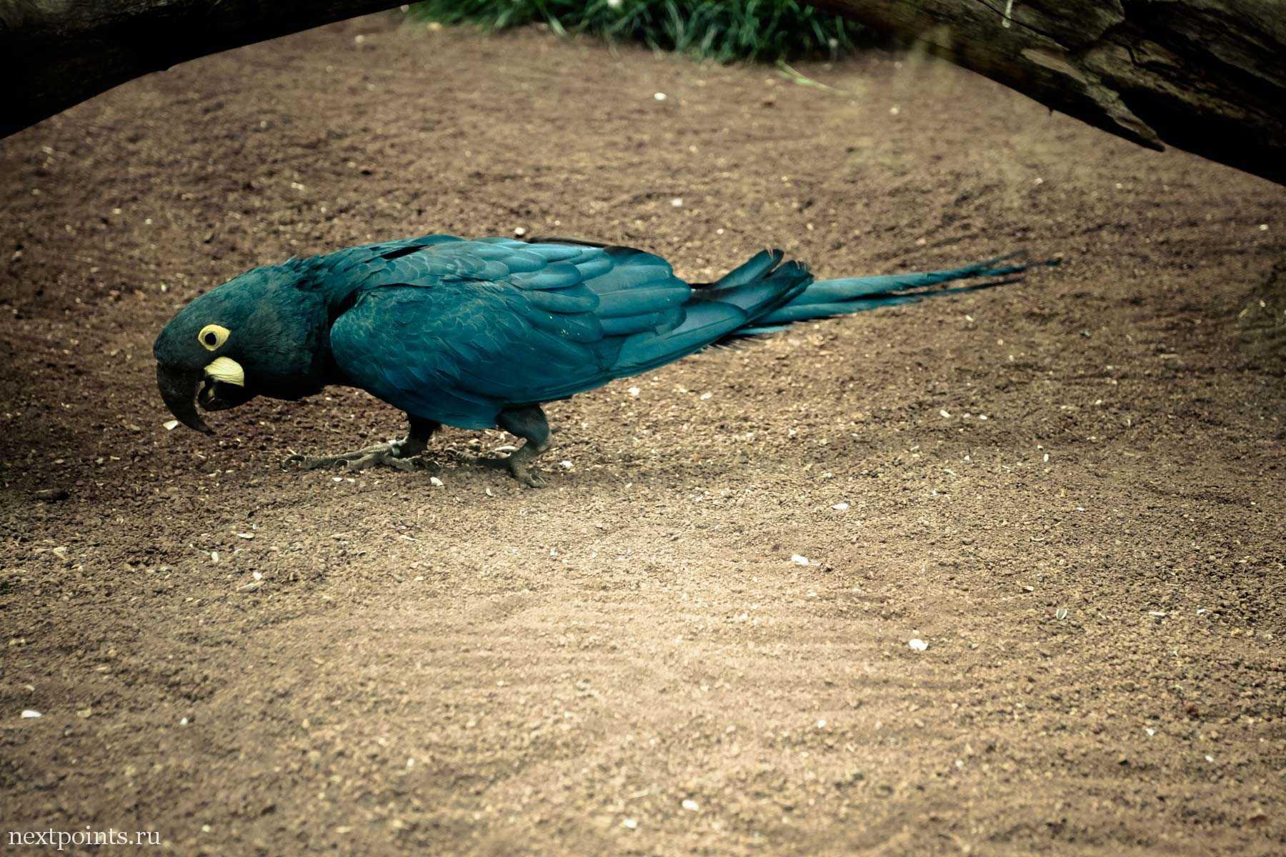 Деловой попугай