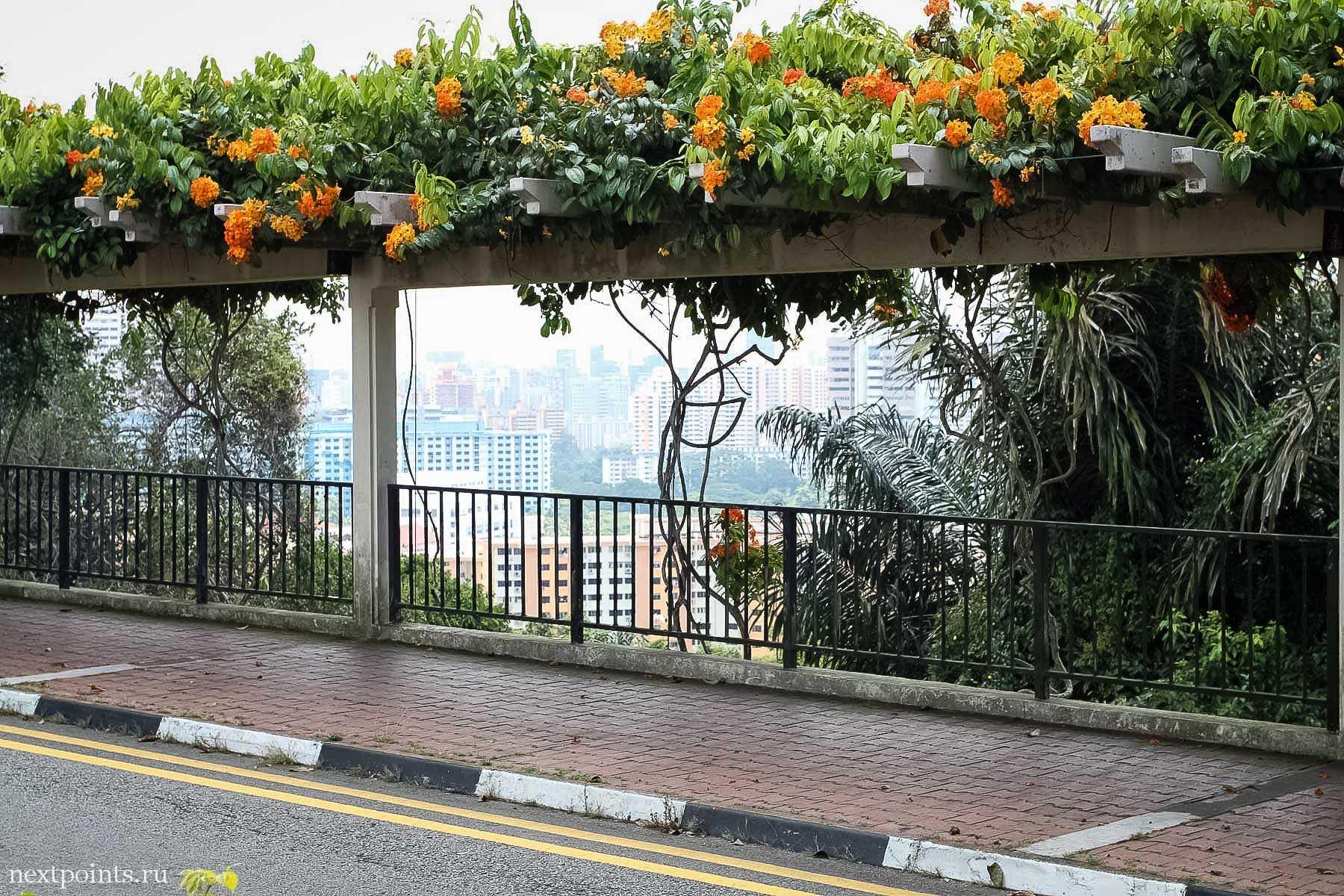 Очень красиво украшенная дорога в парке перед станцией фуникулера до Сентозы