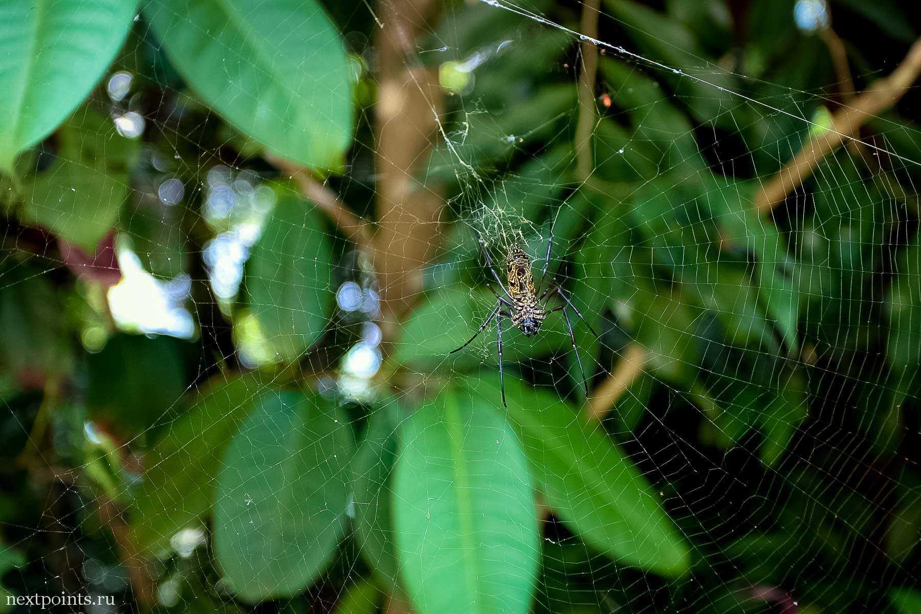 Еще один паук в паутине