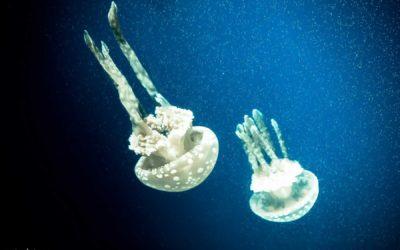 Океанариум на Сентозе и как перемещаться по парку
