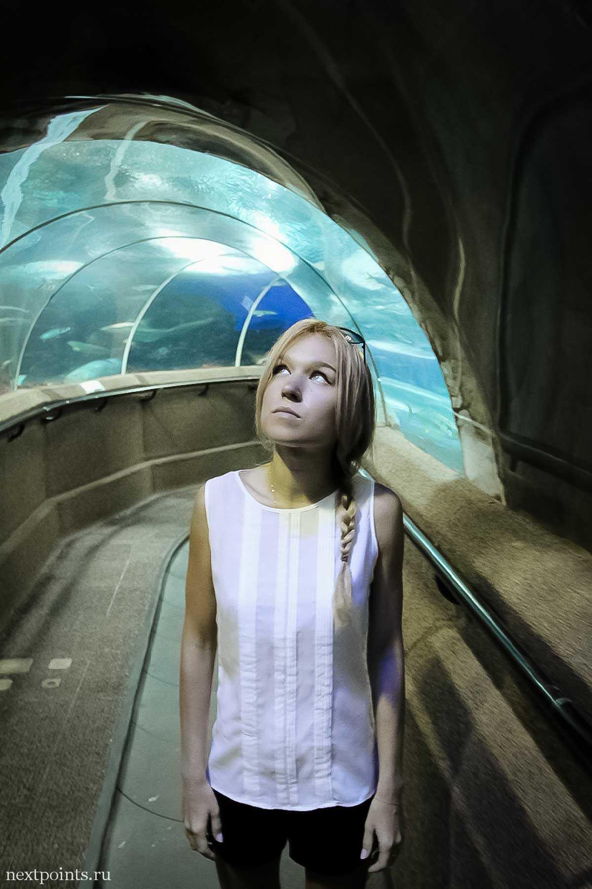 Часть океанариума Сентозы оформлена в виде пещеры с прозрачными стенами и двигающейся дорожкой.