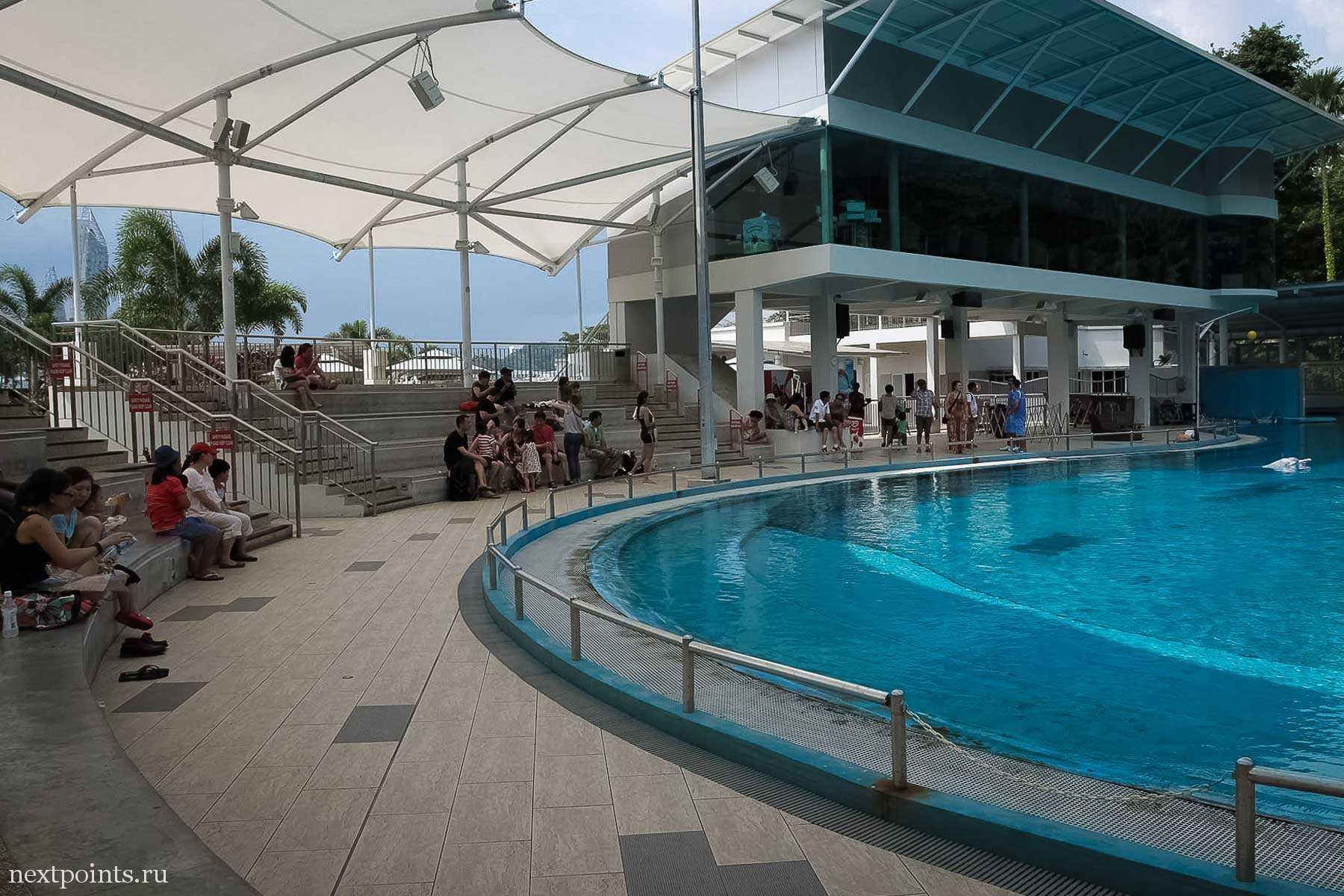 Дельфинарий Dolphin Lagoon на Сентозе
