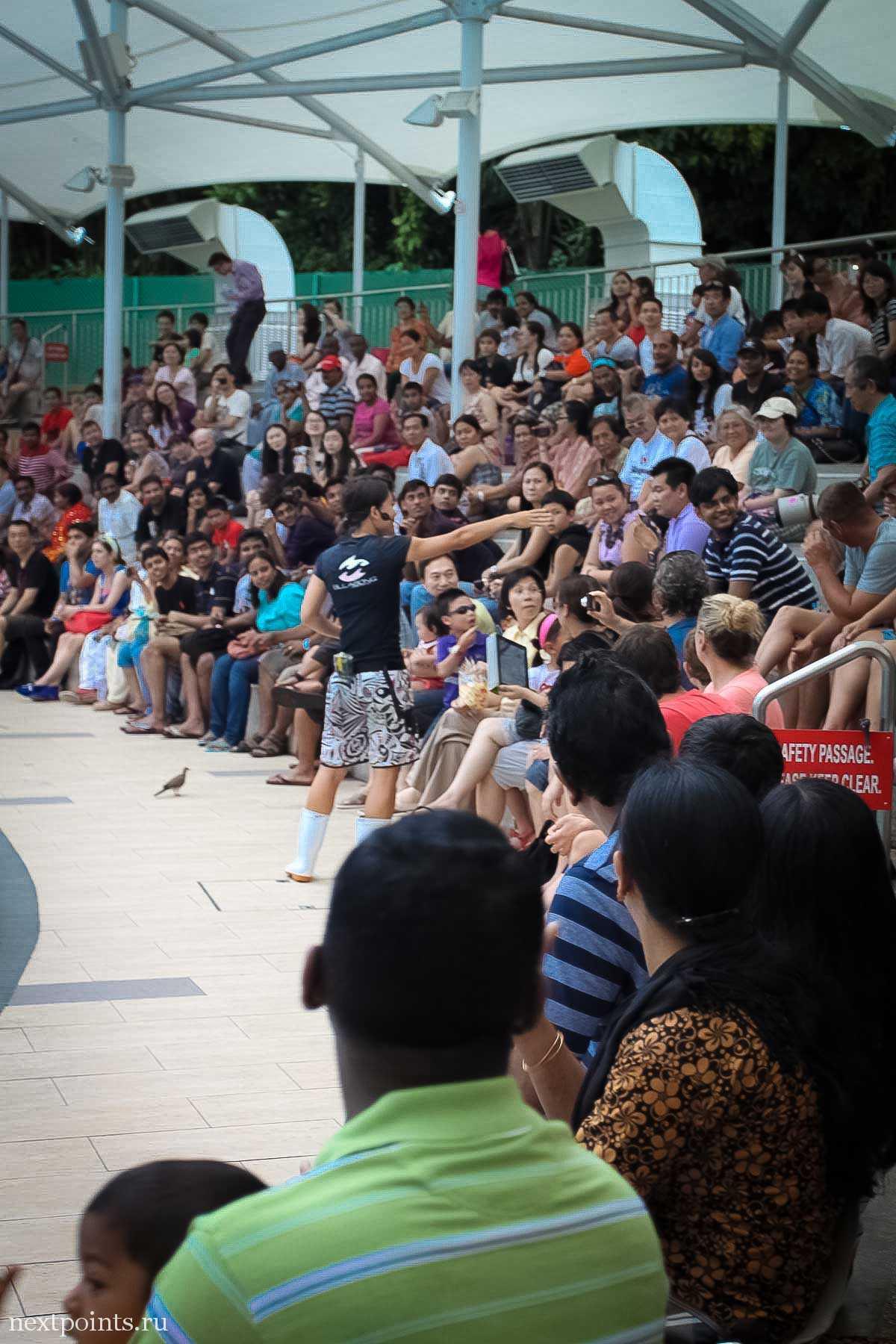 Тренер морских котиков активно общался со зрителями.