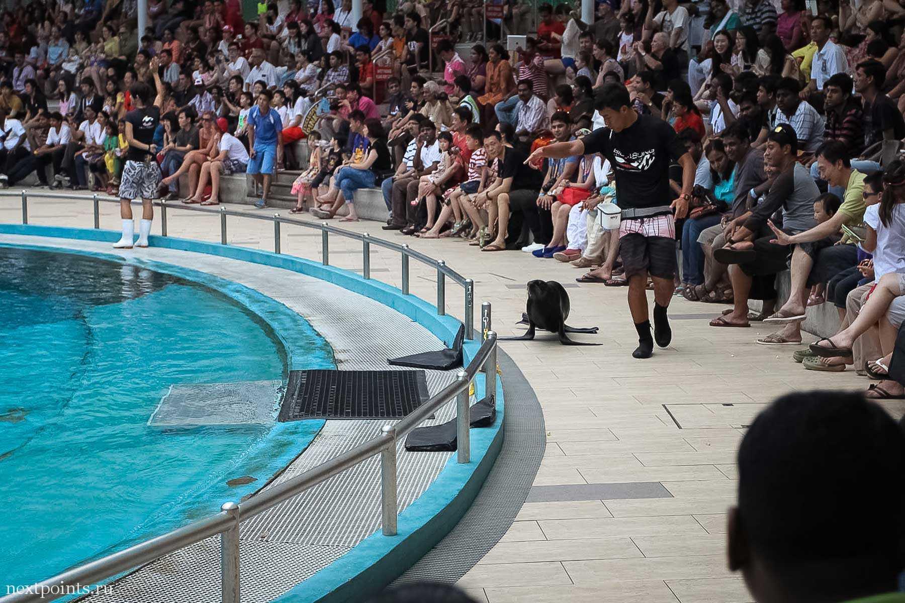Морские котики на шоу дельфинов на Сентозе