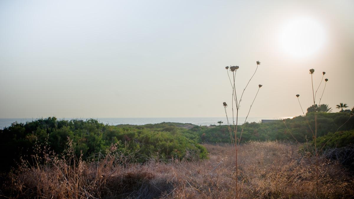 Высокие зонтики растений тянутся к солнцу