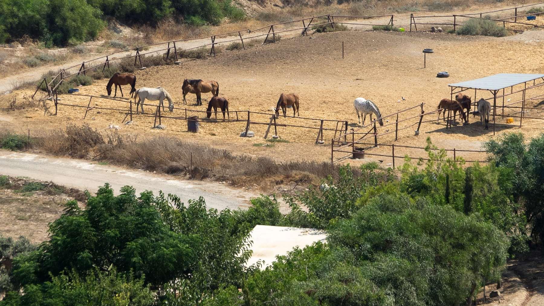 Лошади пасутся около пляжа Курион