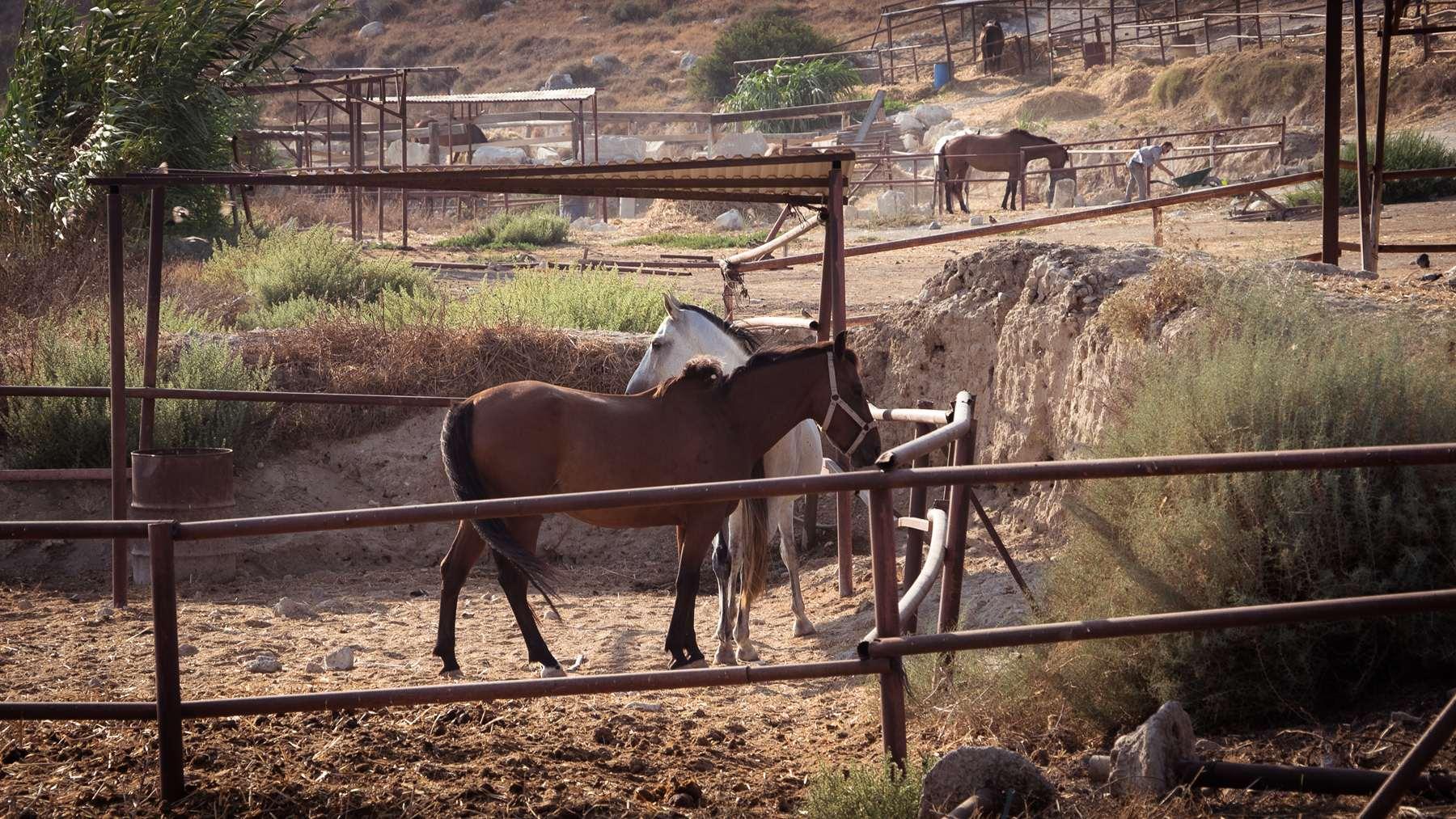 Лошадки на конюшне рядом с пляжем Курион