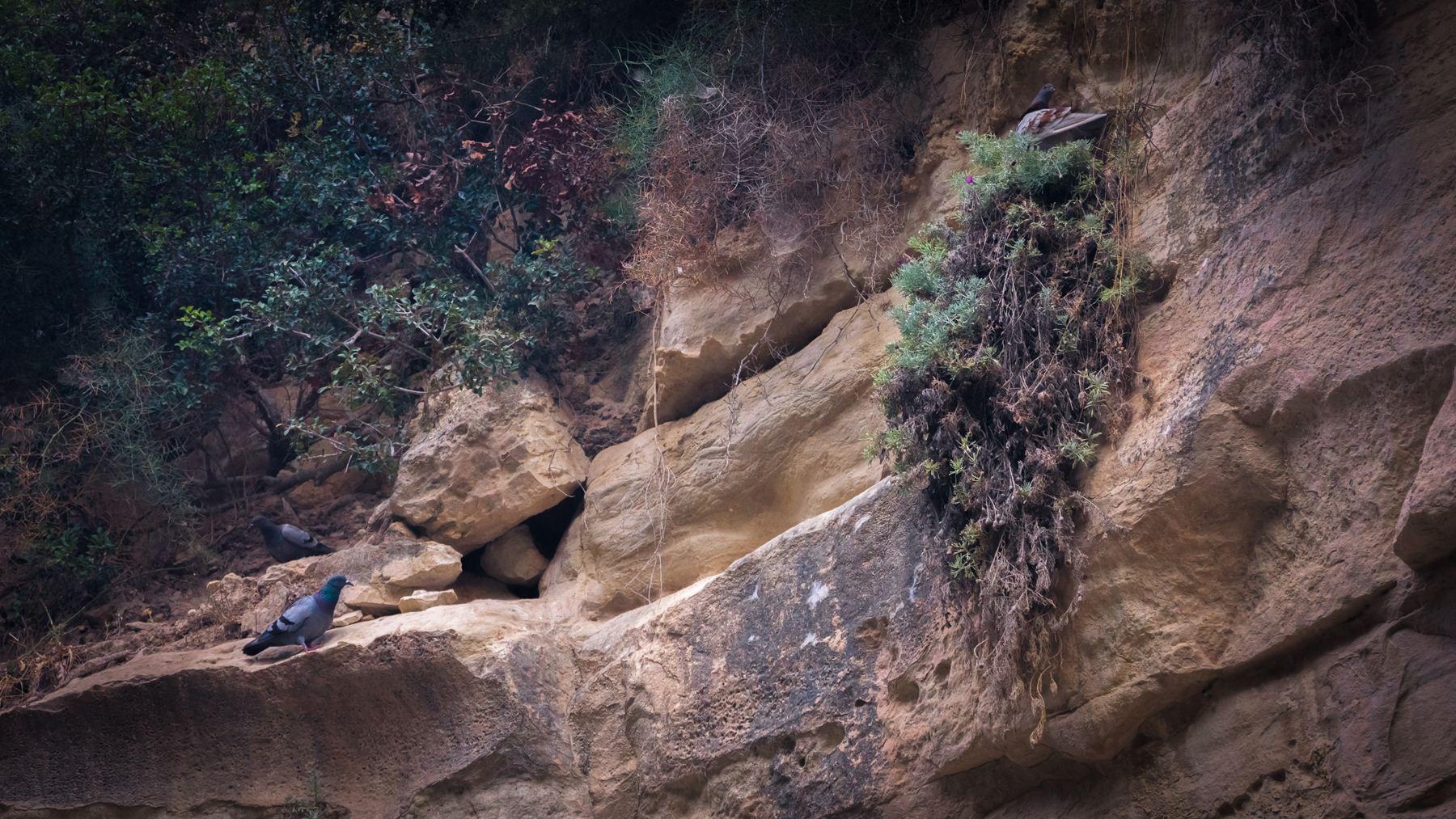 Голуби на скалах Авакаса