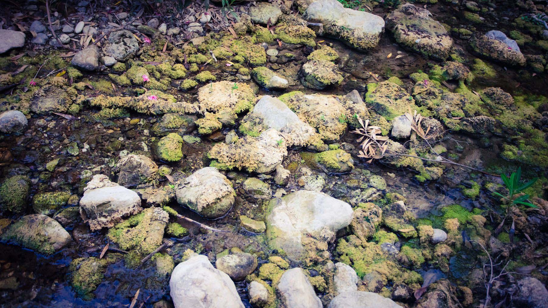 Болотистая часть речки Авакаса