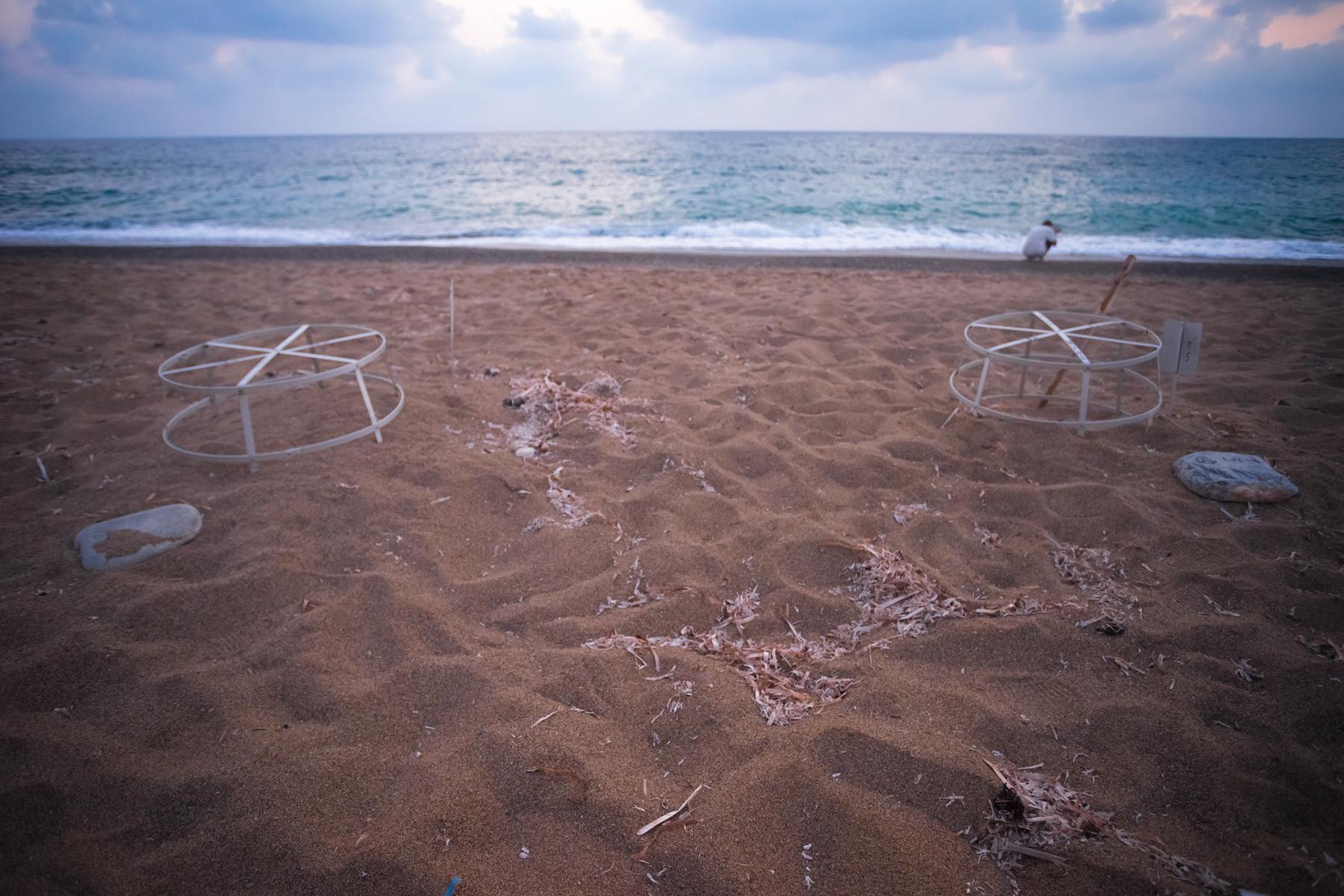 Черепашьи гнезда на пляже Лара