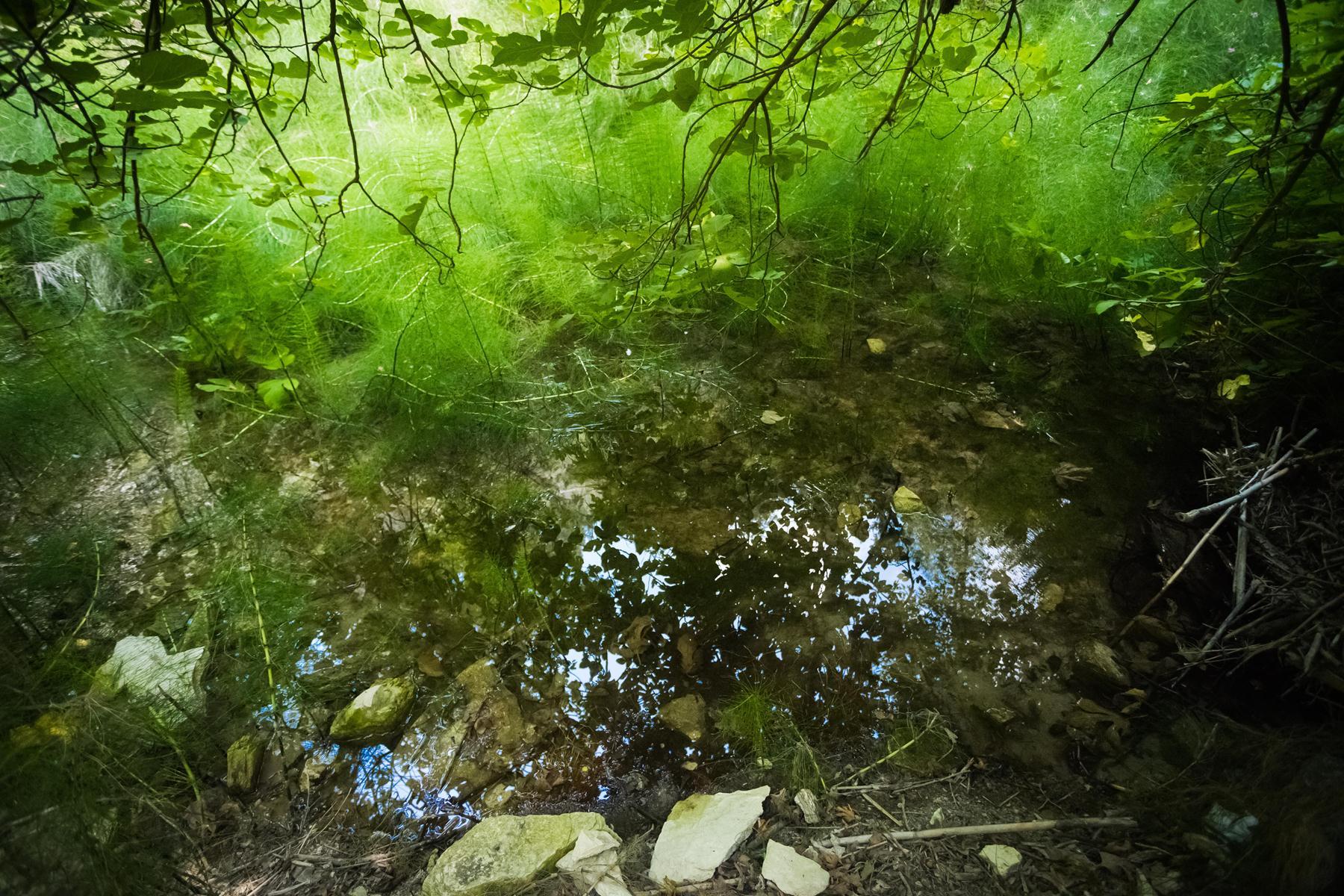 Буйные зеленые краски источника водопада Адониса