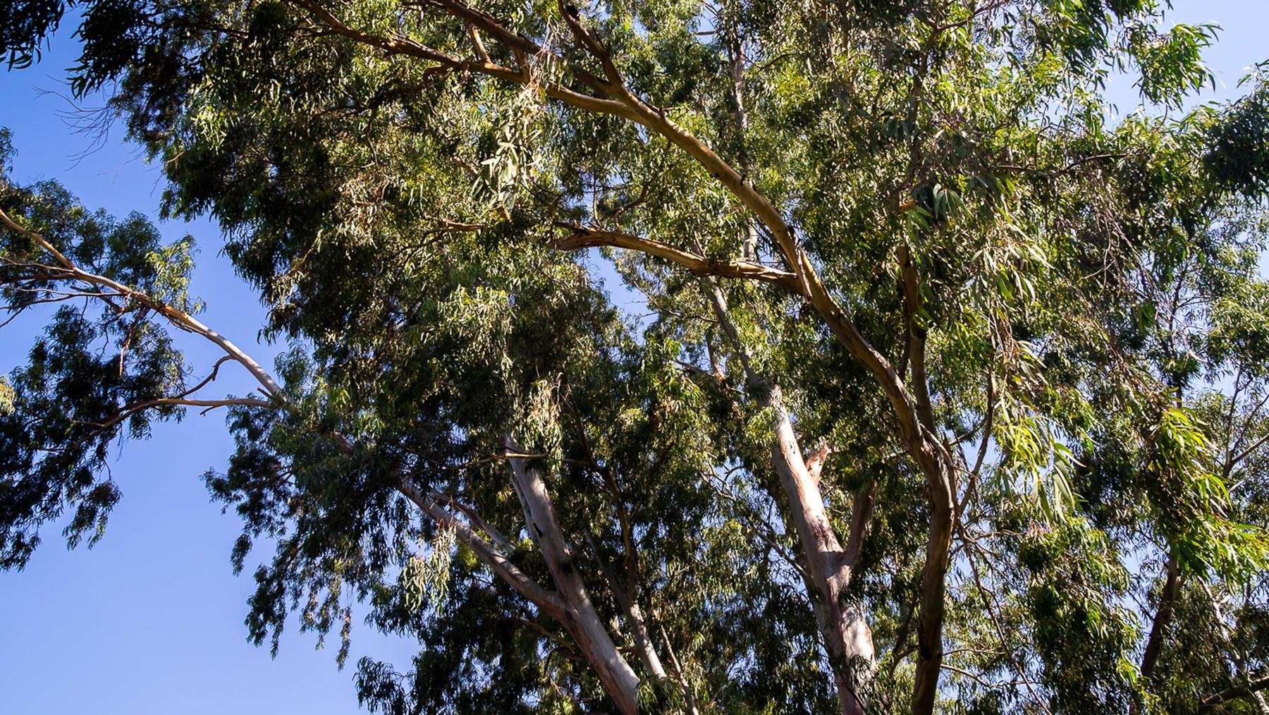 Высокие зеленые деревья