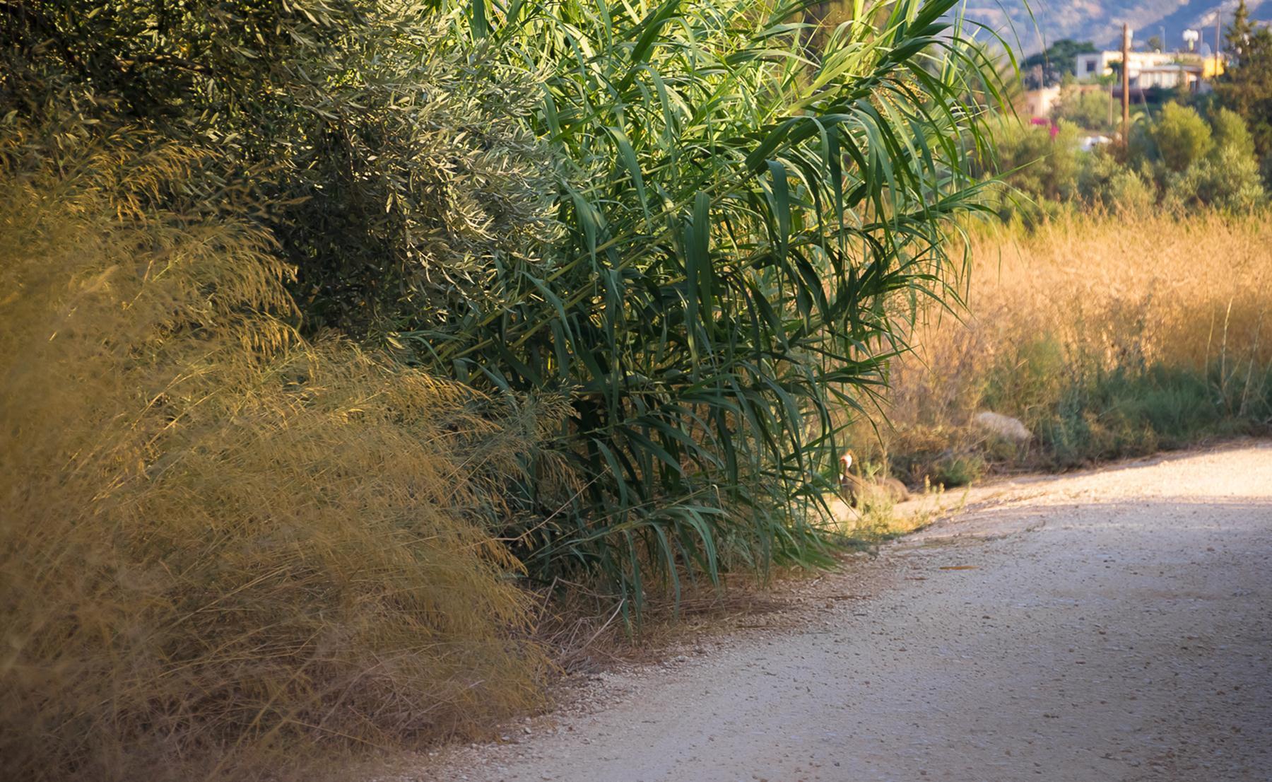 Деревенская дорога Лачи и Полиса