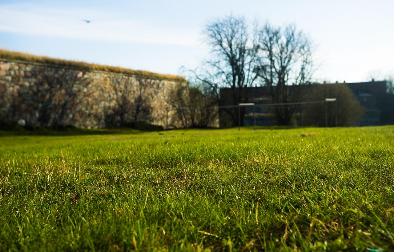 Зеленый газон и военное ограждение Свеаборга
